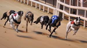 Australian Greyhound Racing Betting Versatility and Options